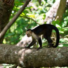 Jungle Adventure and Yoga