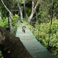 WATERFALL CANOPY TOUR
